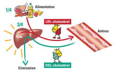 Il prosciutto iberico est buono per il colesterolo